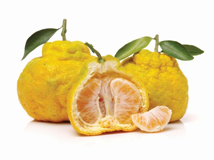 Weird Citrus Fruits 3